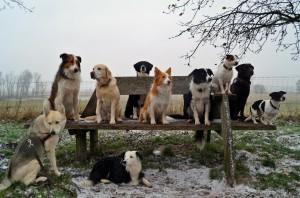 FP-Hunde_weihnachtsspektakel_2015 bearb