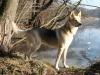 2012-02-01_wald_und_see_h_20120201_022-jpg-small_
